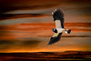 A Lapwing Sunset. (DP the snapper) Tags: sunset montage lapwing worcestershirewildlifetrust