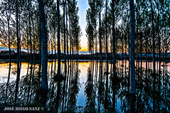 Crecida río Ebro (Sobradiel) (OcDiego) Tags: rio ebro ríoebro riverebro river agua water nikon zaragoza aragón sobradiel puestadesol sunset reflejo reflection tokina tokina1224