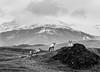 Reindeers think I´m weird apparently (Benóný) Tags: iceland nature animals santa reindeer hreindýr þveitin höfn hornafjörður hornafirði nikon d3 70200 mountain hill grass moss big horn