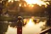 Japanese garden (ninasclicks) Tags: japanesegarden goldenlight bokeh dof