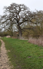 DSC_8961 (PeaTJay) Tags: nikon england uk gb royalberkshire reading winnersh flowers plants trees bushes