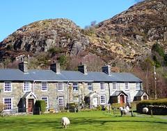 Beddgelert (lesleydugmore) Tags: blue village beddgelert northwales uk britain europe building houses sheep green windows doors chimney roof stone rock hillside