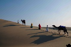 DSC_7827 (rajashekarhk) Tags: shapes shadows movements rajastanis camels sky colours culture colour beauty blue red rajashekar rajastan hkr nikon northindia desert animal nature