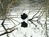 IMG_5807 (Johnh111003) Tags: johnh111003 rickmansworth iphone aquadrome