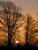 ..and a Robin sang high up in the tree (jump for joy2010) Tags: catchup 2018 winter motherearth england uk somerset nature march sunset trees silhouettes beechtrees westhuntspill