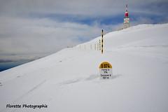 Sur la route (Florette Photographie) Tags: montventoux terrasse montserein geantdeprovence bedoin sault col neige vélo cyclotourime tourdefrance nikon d600 france francia montagne pelé randonnée moutain europe vaucluse