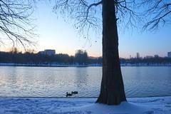Iarnă din nou (Dumby) Tags: bucharest românia sector3 ior titan winter snow seasons nature bucurești