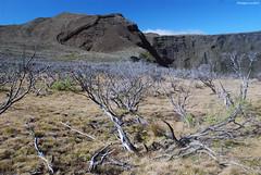 Branles devant le Piton de Sable (ou Piton dans l'Bout) (philippeguillot21) Tags: volcan piton réunion branle arbuste france outremer indianocean africa pixelistes nikon