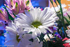 Happy Easter (11Jewels) Tags: canon 1855 daisies easter holiday