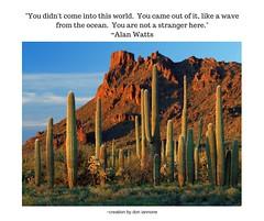 Alan Watts on Nature (Don Iannone) Tags: sedonaarizona wisdomquoteandphoto