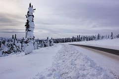 The Road to Winterland (Dhari .K ALFawzan) Tags: ak usa alaska cold gray white alone landscapephotography roadtrip skyline canon photography arctic wilderness explore adventure blackice snow ice frozen clouds sky tree landscape road highway