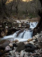 DSC_5288 (jonathan _ paul) Tags: water greece karditsa mainland forest river