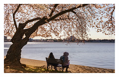 ... (static_dynamic) Tags: relax tidalbasin washingtondc cherryblossom cherryblossomfestival flower tree spring bench waterfront jeffersonmemorial
