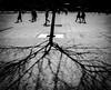Shadows (MortenTellefsen) Tags: 2018 gatefoto april shadow shadows svarthvitt street streetview gate bw blackandwhite bergen blackandwhiteonly tree norway norwegian monochrome