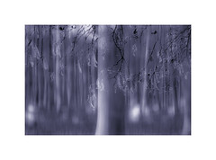 Ethereal. (muddlemaker1967) Tags: hampshire landscape photography stoke park woods icm multiple exposure fuji xpro1 nikkor 105mm f25 ais fotodiox adapter