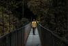camí a la jungla (Kaobanga) Tags: camins caminos paths camí camino path way pont puente bridge selva jungla jungle forest concepte concepto concept conceptual groc amarillo yellow costarica monteverde canon5dmarkii canon5dmkii canon5dmk2 canon28300 28300 28300mm canon28300mm kaobanga