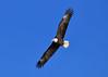 On The Wings Of Eagles (MJMPhoto II) Tags: americanbaldeagle baldeagle eagle mississippiriver nikon nikond850nikon200500mm mjmphotoart