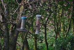 Great Tit 140418 - DSC_0286 (Leslie Platt) Tags: exposureadjusted straightened cheshirewestchester redhillcottages gardenbirds greattit