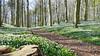Waldspaziergang (Don Bello Photography) Tags: frühling 2018 inselrügen lietzow jasmunderbodden waldboden buschwindröschen waldweg acdsee fz1000 panasonicfz1000 lumixfz1000 mecklenburgvorpommern reinhardbellmann donbellophotography anemone