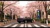 Mazda RX7 (at1503) Tags: japan 1991 1990s mazda rx7 mazdarx7 pink purple blossom spring springcolours urban buildings japanese reflections light shadows warmtones daytime blur lowaperature granturismo granturismosport digitalmotorsport digitalphotography motorsport racing game gaming ps4 cherryblossom