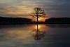 IMG_8428 (geraldtourniaire) Tags: landschaft natur nature canon 6d eos6d 24105l franken baum