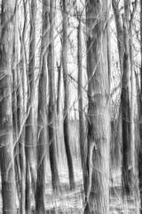 forest dream (sami kuosmanen) Tags: nature luonto light landscape tree photography puu pitkä valo valotus taivas talvi trees intentionalcameramovement icm metsä finland forest kuusankoski kouvola suomi bokeh blur