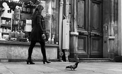 Échelle. (Canad Adry) Tags: paris sigma 19mm dn art f28 sony e mount alpha mirrorless a6000 af noir et blanc black white street rue walking walk pigeon bird woman femme city life