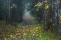 Foggy forest walk (Helena Normark) Tags: forest fall autumn path strömsund jämtland sweden sverige sonyalpha7 a7 50mm monocle монокль monolens russianlens