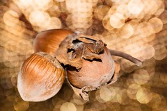 Magic hazelnuts - Magische Haselnüsse (HMM !) (ralfkai41) Tags: makro bokeh farytale macro macrom hazelnuts aschenputtel conderella onceuponatime haselnüsse märchen