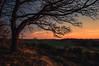 Eifel (Netsrak) Tags: europa europe eifel baum landschaft sonnenuntergang sunset colors farben rheinbach nordrheinwestfalen deutschland de
