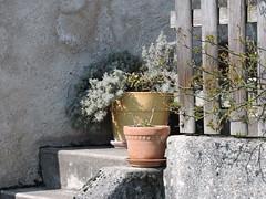 DSCN2726 (keepps) Tags: switzerland suisse schweiz spring vaud luins