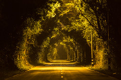 Road with Tree tunnel in the Dark. (baddoguy) Tags: color image copy space country road dark direction empty forest highway horizontal horror igniting journey nature night no people outdoors photography rural scene shadow straight street light thailand tourism transportation trat province travel destinations tree area tunnel two lane woodland