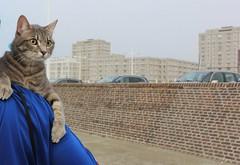 1563 LIGNE DE MIRE (rustinejean) Tags: rustine animal nature bleu blue chat cat gris 1