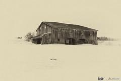 180228-66 La grange aux arches (clamato39) Tags: grange barn beauce provincedequébec québec canada sepia sépia rural field champ hiver winter snow neige