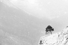 Lone tree (marianna_a.) Tags: lonely tree mountain hill outcrop hillside landscape bwblackandwhite monochrome usa snow winter austere severe minimalist mariannaarmata