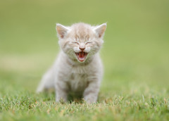 'Good Times' (Jonathan Casey) Tags: kitten rescue norfolk uk nikon d810 200mm f2 vr