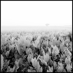 B&W03 (=Heo Ngốc=) Tags: trees water nature landscape over exposure fog bw blackandwhite vietnam contrast nobody