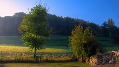 Arboles / Trees (López Pablo) Tags: tree green landscape leon spain nikon d7200