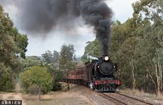 Heavy Going (Dobpics O'Brien) Tags: j549 train rail railway railways engine steam locomotive victorian victoria vr castlemaine muckleford maldon goldfields pass