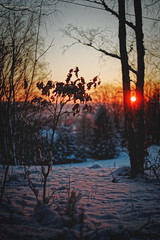 #187 - Winter sunset #4 / Zimní západovka #4 (photo.by.DK) Tags: winter wintersunset wintermood winterabstract winterabstraction sunsetmood bokeh bokehlicious beyondbokeh oldlens legacylens manuallens manualfocus manual manualondigital vintagelens wideopen shotwideopen wideopenbokeh sonya7 sonyilce sony sonyalpha sonya7ii pancolarauto5018mc pancolar pancolarauto pancolar50 pancolarauto50 pancolar5018 carlzeiss zeiss zeisslens carlzeisspancolar czj carlzeissjena carlzeissjenapancolar m42 m42lens artbydk photobydk