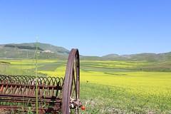 Castelluccio di Norcia (maurizio.moro) Tags: altopiani prati fiori monti natura lenticchie