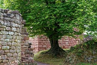 Si les arbres pouvaient parler...