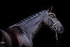 Halle Berry - beautiful mare (Boudewijn Vermeulen ) Tags: paard paarden portret horse mare equine equinephotography portrait animal darkbackground