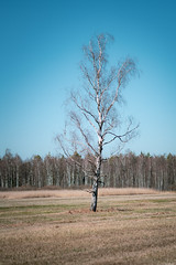 Segregate (Rico the noob) Tags: 2018 d850 landscape nature germany outdoor 135mm trees mf tree forest 135mmf28 sky manualfocus grass published dof
