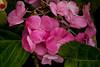 IMG_1090 (Lightcatcher66) Tags: blütenundpflanzen florafauna makros lightcatcher66