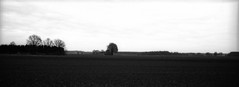 Desolation (Rosenthal Photography) Tags: washia12 winter bnw rodinal15020°c13min schwarzweiss anderlingen panorama 35mm mamiya7 kleinbildformat ff135 asa12 städte bw landschaft analog 20180302 dörfer siedlungen landscape nature march desolation mood blackandwhite mamiya 6x7 50mm f45 panoramakit washi washia rodinal 150 v800