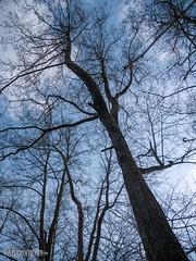 Spring is coming (0050) (Stefan Beckhusen) Tags: springseason sky sunny sun tree lowangle extremlowangle outdoor vegetation ecosystem season seasonal growth tall standing