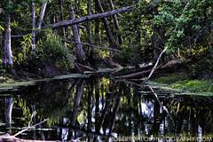 Nature's Guardian (Roberto_Aloi) Tags: southfloridawetlands robertoaloiphotographycom smcpentaxa135mmf28 pentaxk1 nature forest trees