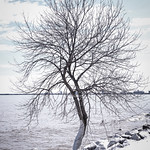 Lakewalk, Duluth 4/17/18 #lakesuperior #tree #snow thumbnail