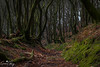 St Mary's Vale (geraintparry) Tags: st marys vale woods sugar loaf tree trees south wales monmouthshire woodlands d500 sigma nikon 1750 nature outdoor path leaves forest wood trail
